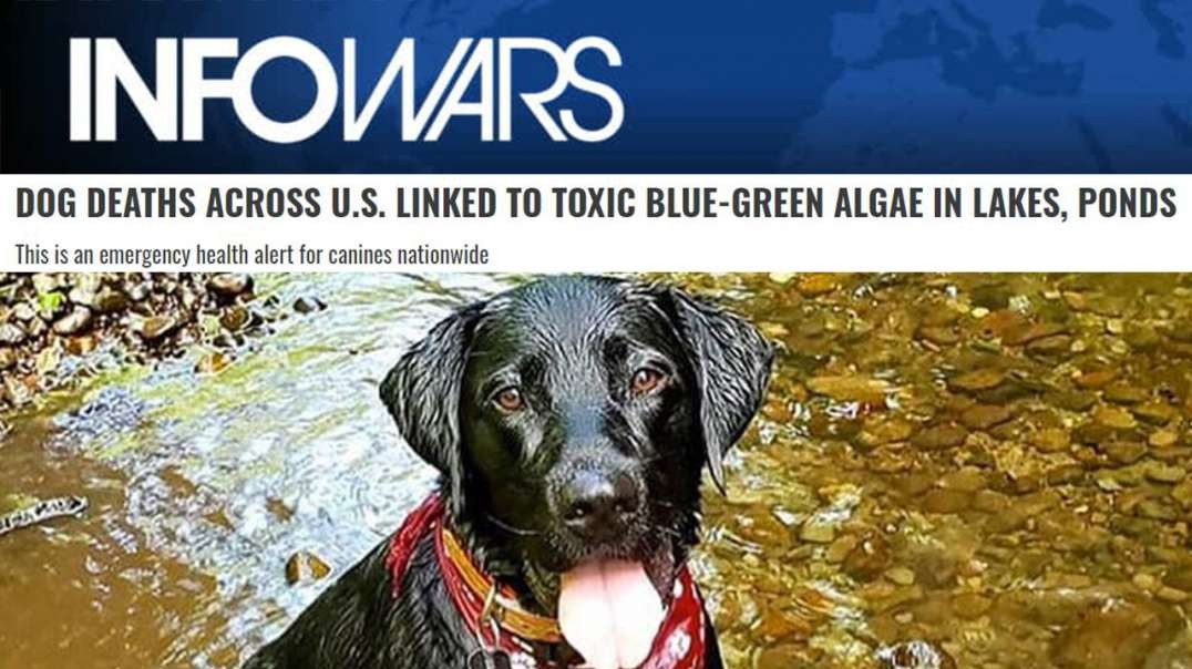 Dog Deaths Linked To Toxic Algae Showcase Rising Global Toxicity