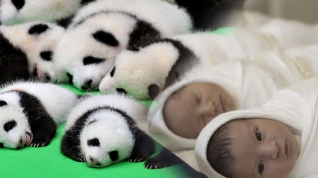 Love the Baby Panda? Why Do We Despise Our Own Babies & Kill Them?