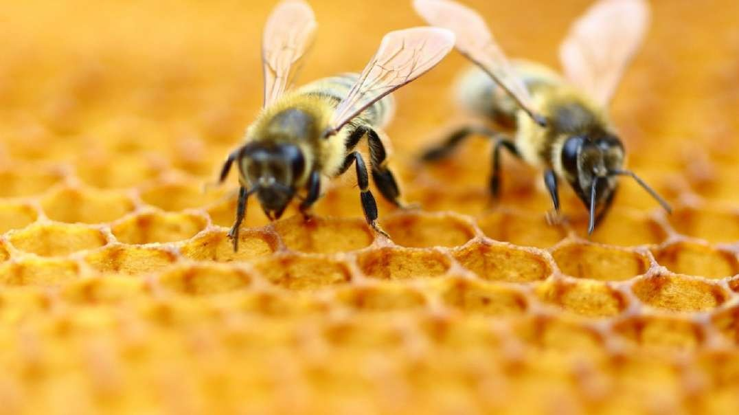 Michigan Drops Honeybee-Killing Nerve Agent Over State