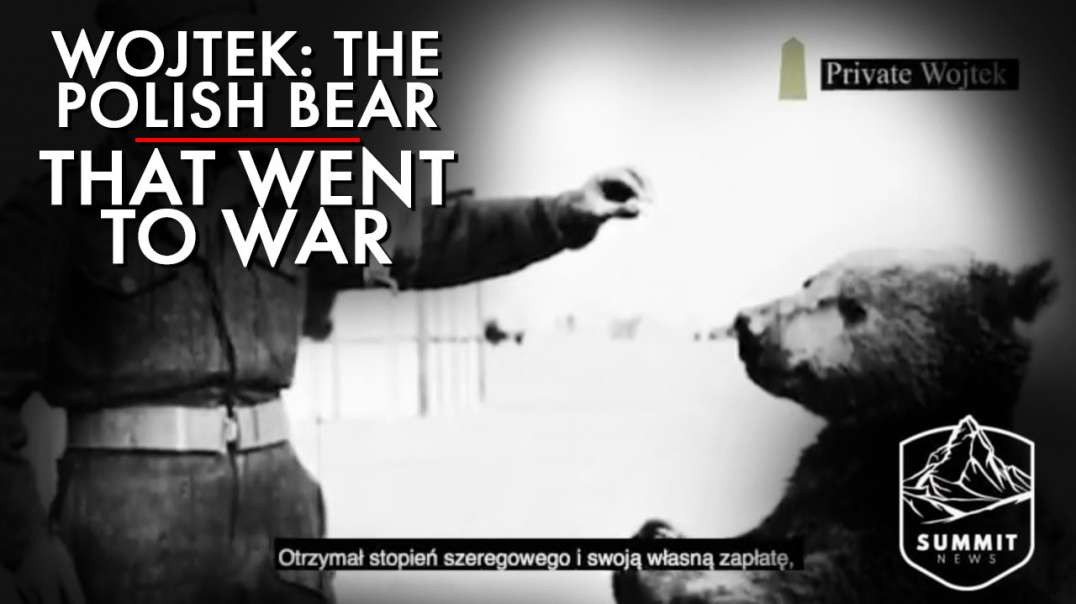 Meet Wojtek The Polish Bear That Went To War