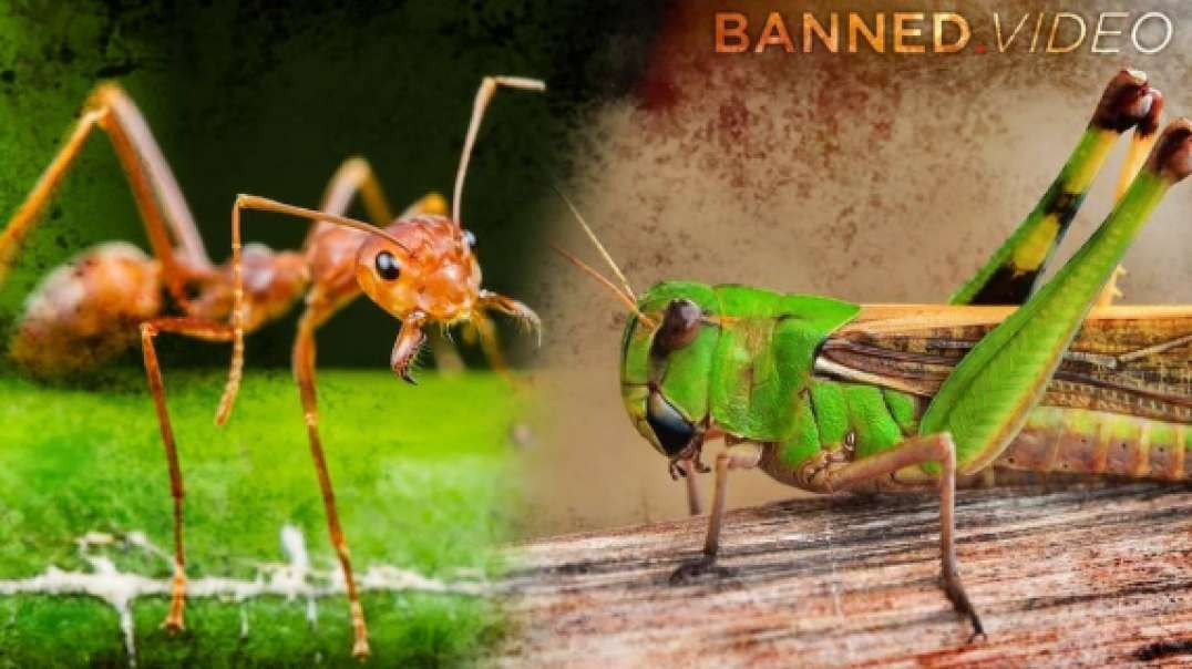 Ant VS Grasshopper: Learn How To Survive