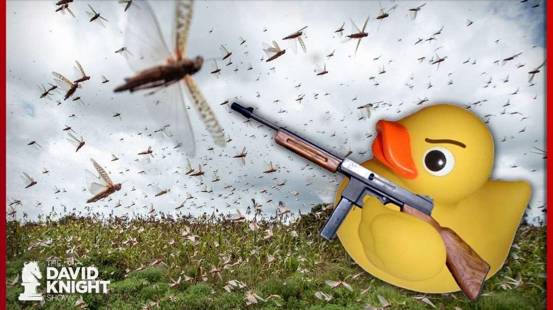 Killer Ducks vs Locust Plague: Will They Be Enough?