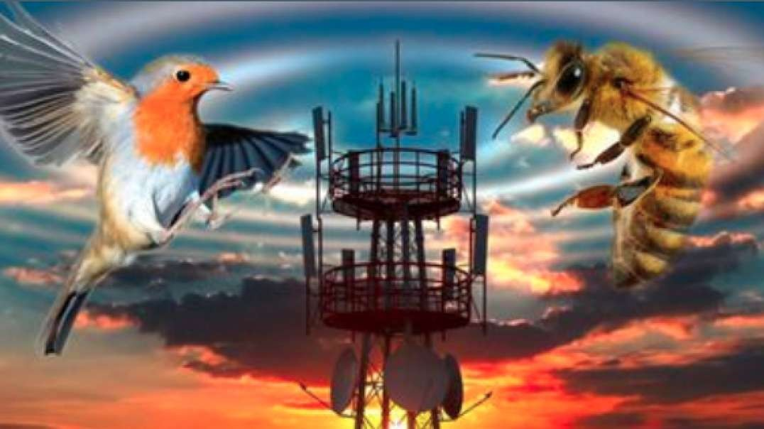 Birds And Bees: Will 5G Also Kill Humanity?