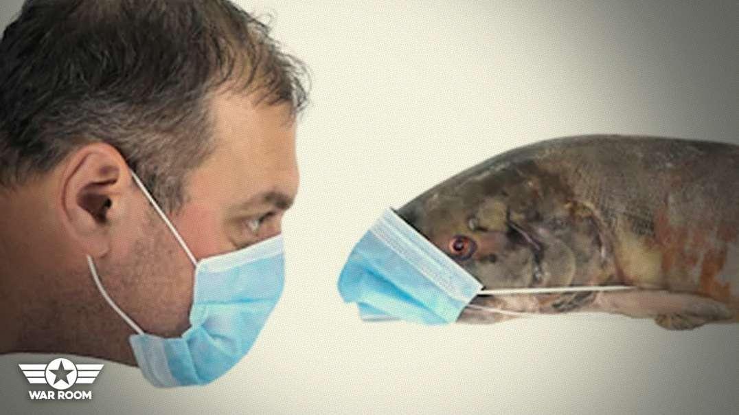 Fisherman In Single Boats Forced To Wear Masks In Alaska