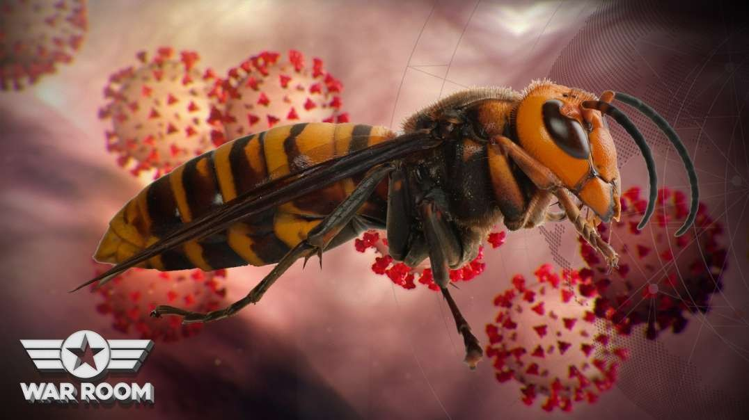 What Happened To The Murder Hornets?