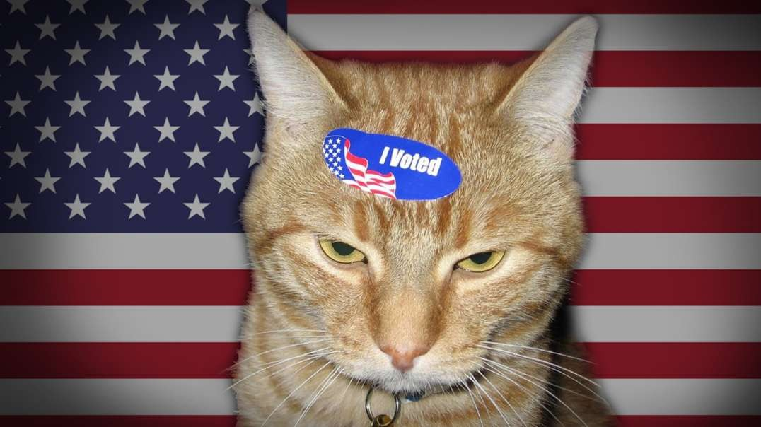 HIGHLIGHTS - Patriotic Cats Sign Up To Vote In This Historic Election