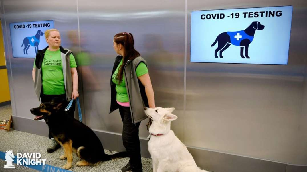 Air Travel Lockdown: Mandatory Testing Pre-Flight, Corona-Sniffing Dogs