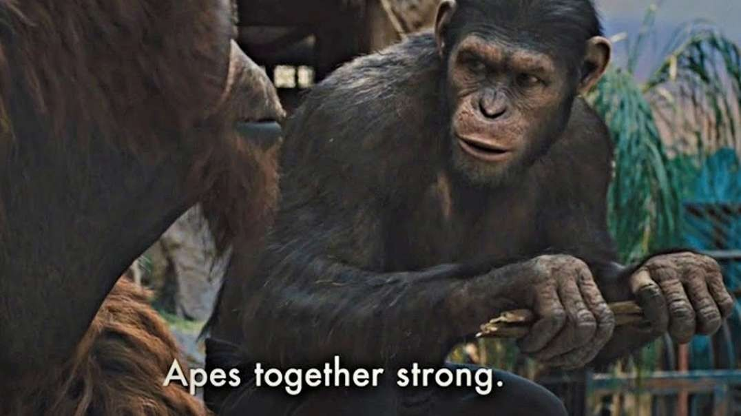 HIGHLIGHTS - Planet Of The Apes: 2021 Edition