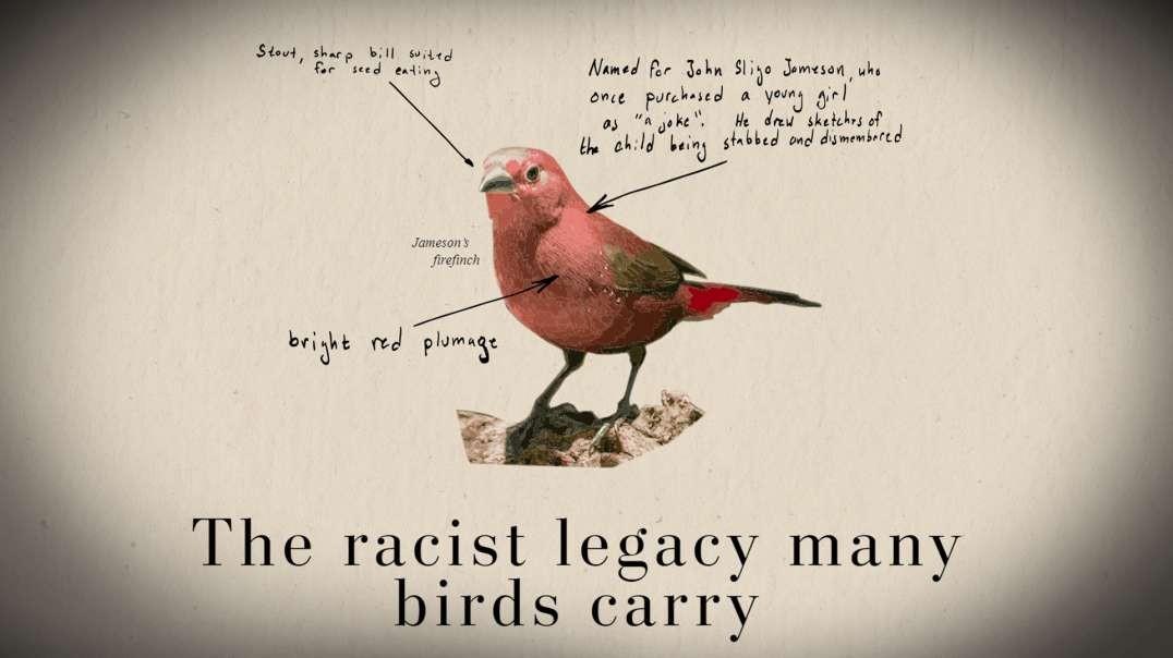 HIGHLIGHTS - Breaking! Racist Bird Watching Threatens America!