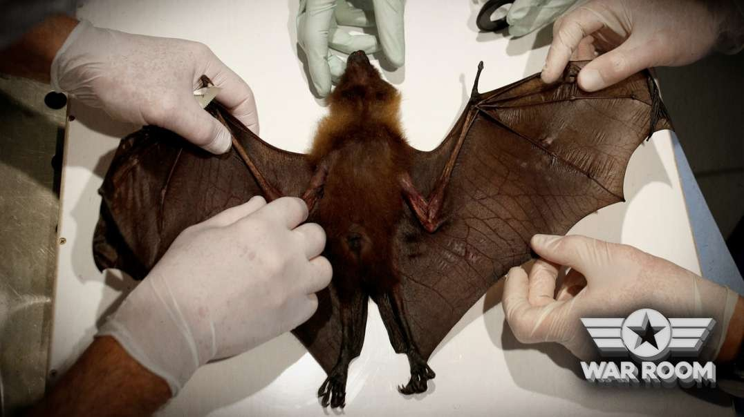 BREAKING: Wuhan Scientists Planned to Infect Wild Bats With COVID